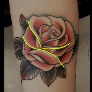 rose drawing w